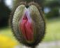 l'obscénité des fleurs